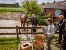 Vrijwilligers schieten 't Olde Manegepeerd in Dalmsholte te hulp, nu oude en zieke dieren al snel moeten verkassen