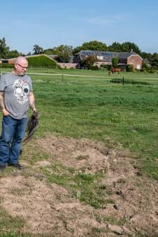 Paard Jim werd in Balgoij toegetakeld, tot de dood aan toe: 'Het enige wat ik nog heb, is zijn staart'