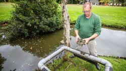 """Schildpaddenplaag in de Molenvijver: """"Eerst zijn ze schattig, maar daarna vervuilen ze wel het water"""""""