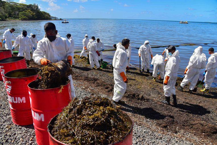 Het door de olie vervuilde zeewier wordt in lege vaten opgeslagen en weggevoerd. Beeld AFP