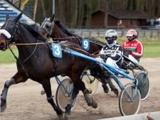 Local hero Wim is de hele week bezig met de paardensport: 'Dit is voor mij het leven'
