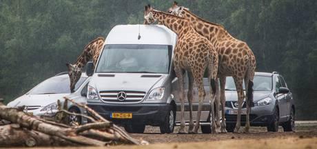 VIDEO: Bekijk 360-graden beelden van de vernieuwde autosafari