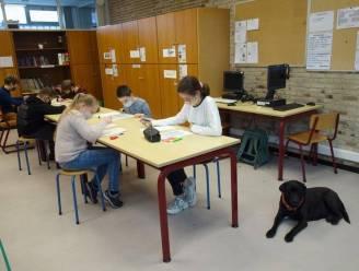 """Hond Zora gaat voortaan elke dag naar de klas in Emmaüsinstituut: """"Dit brengt rust voor onze leerlingen"""""""