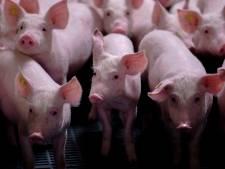 D66: Verplaats nieuwe stallen in Leersum tegen varkensstank