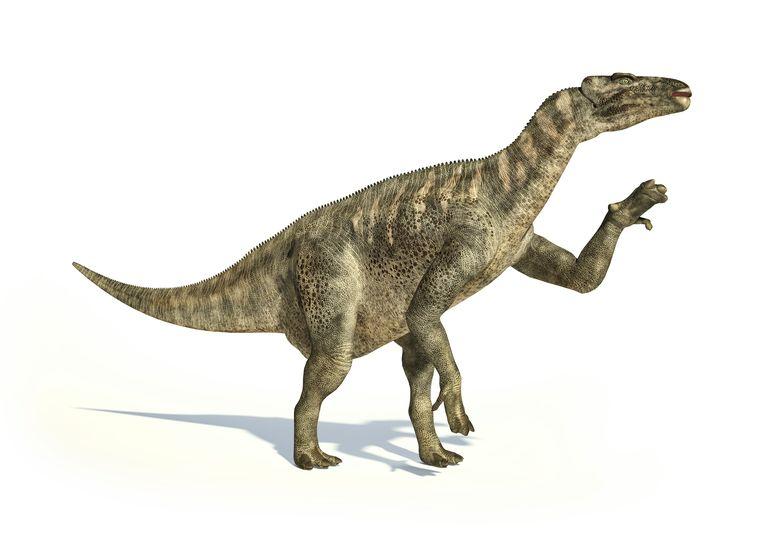 Het versteend stukje is afkomstig van een iguanodon. Beeld Belga