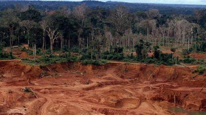"""""""Tachtig procent ontbossing gebeurt in elf gebieden"""""""