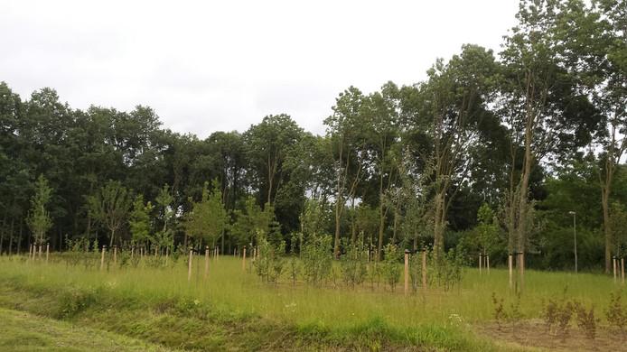 Op de hoek Vorsenpoel-Puttersdreef moet de nieuwe aanplant de komende jaren uitgroeien tot een heus 'voedselbos' voor de buurtbewoners.