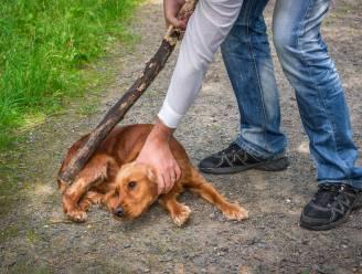 """Boetes voor dierenbeulen worden tot vijftig keer strenger: """"We pikken zo'n gedrag in Vlaanderen niet meer"""""""