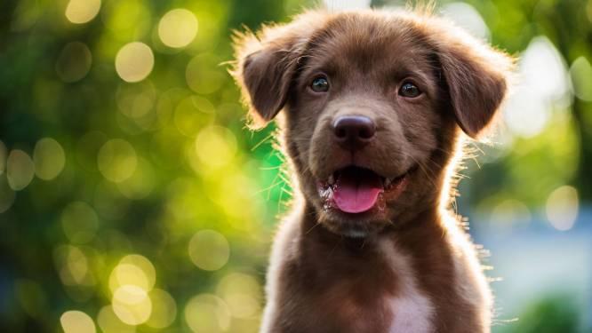 """Man riskeert werkstraf nadat hij zijn 'uitgeleende' hond terughaalt: """"Mijn dochter was elke avond aan het wenen"""""""