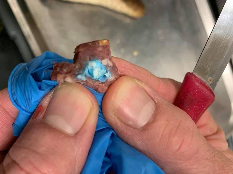 Het gevonden stukje worst met gif in de vorm van blauwe tabletten. Beeld