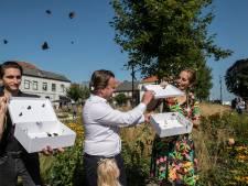 Met het loslaten van de vlinders is Vlindertuin de Zindering officieel geopend