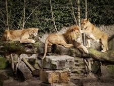 1,3 miljoen euro voor Artis: dierentuin niet vergeten maar ook nog niet gered