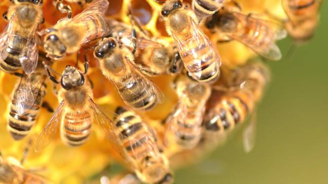 Spaanse (55) sterft na acupunctuursessie met bijensteken