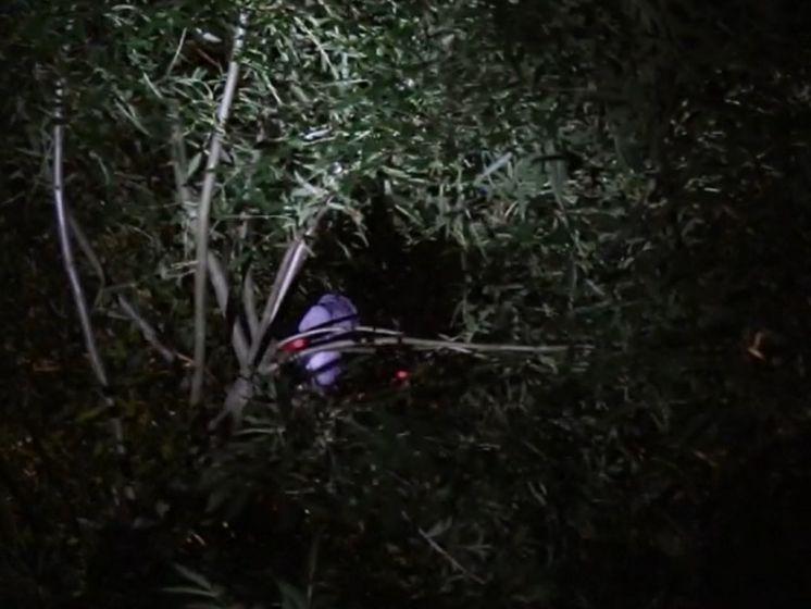 Baasje ontdekt ontsnapte papegaai hoog in de boom