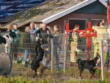 Verslagenheid na verwoestende brand op hondenfokkerij Hasselt, 12 honden omgekomen