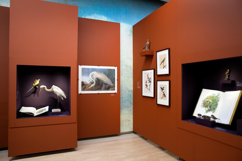 Vogelpracht in het Teylers Museum, met onder andere The Birds of America van John James Audubon (1785-1851). Beeld Judith Jockel