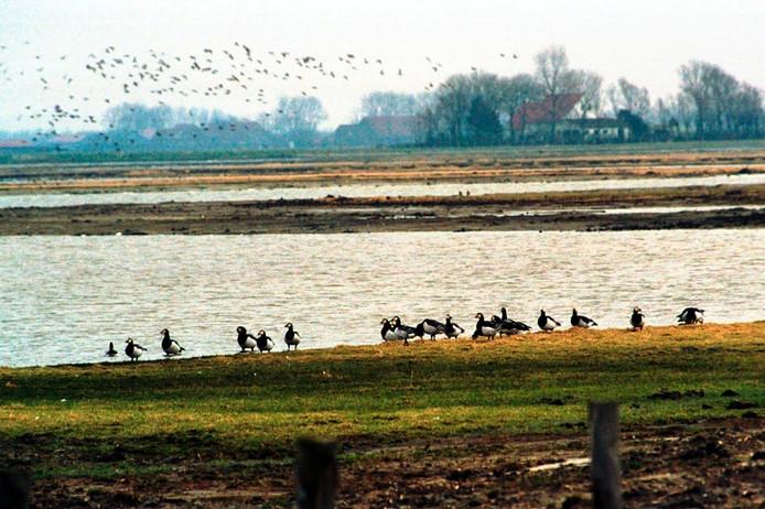 Natuurgebied Tureluur bij Zierikzee.