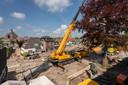 De reconstructie van het Maurickplein in Vught gaat momenteel samen met behoud van de bruine beuk. In een eerder plan zou deze monumentale boom, rechts op de foto, moeten wijken.