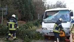 LIVE: Storm houdt lelijk huis: boom op schoolbusje in Kontich, trampoline op sporen