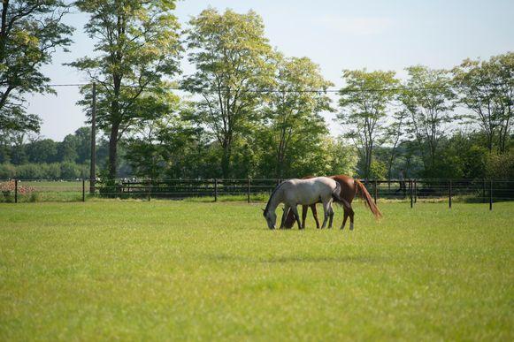 De naturistencamping Grensland in Nieuwmoer ligt tussen de groene weides.