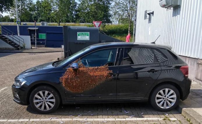 Een bestuurder trof een zwerm van wel 20.000 bijen aan op het portier van zijn geparkeerde auto.