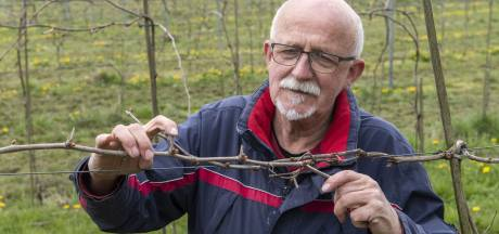 Druiventelers in de Achterhoek wapenen zich tegen nachtvorst: 'De grote angst van elke wijnboer'