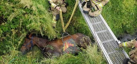 Brandweer takelt paard uit de sloot in Oostburg