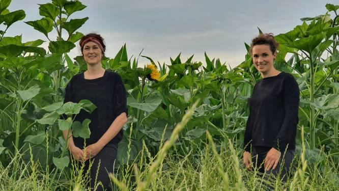 """Vriendinnen openen pop-up Graanbar in maïsveld omgeven door 5.000 zonnebloemen: """"Droom ontstaan in volle coronatijd: we wilden iets ondernemen"""""""