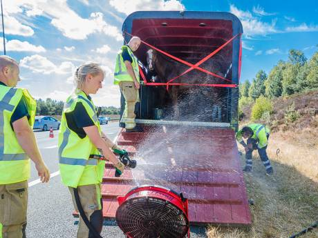 Brandweer koelt paarden in gestrande trailer op A28