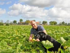 Handmatig oogsten van 18 ton pompoenen is pure noodzaak
