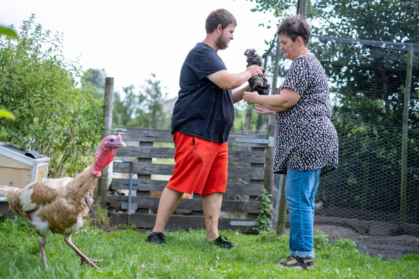 Een twintigtal sierkippen van het Lierse gezin Leflot werd gestolen. Zoon Tom is een gepassioneerd kippenhouder.