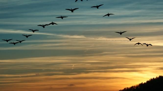 Meer dan 160.000 overvliegende trekvogels geteld in ons land tijdens jaarlijkse EuroBirdwatch