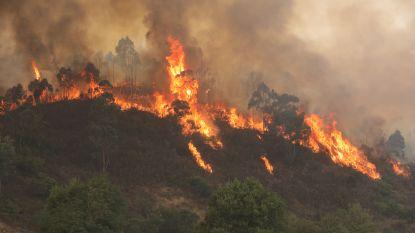 """""""Bosbranden in Algarve zullen nog dagen woeden"""""""