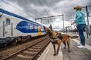 Politiehond Chica met bazin op het treinstation van Elst.