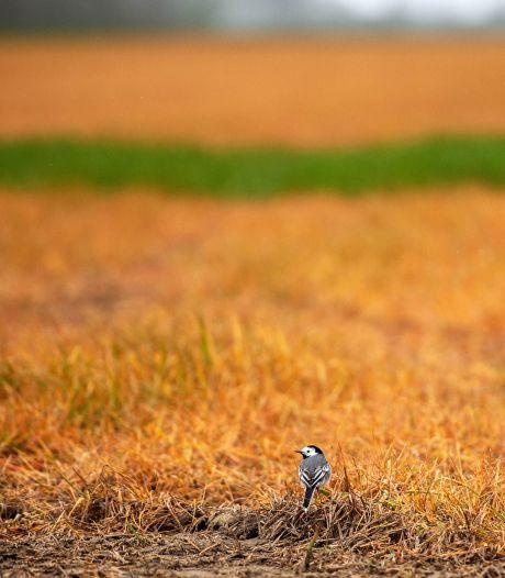Brabant strijdt tegen oranje akkers door landbouwgif glyfosaat