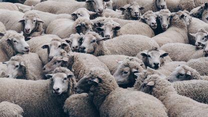 Werkt schaapjes tellen eigenlijk echt?