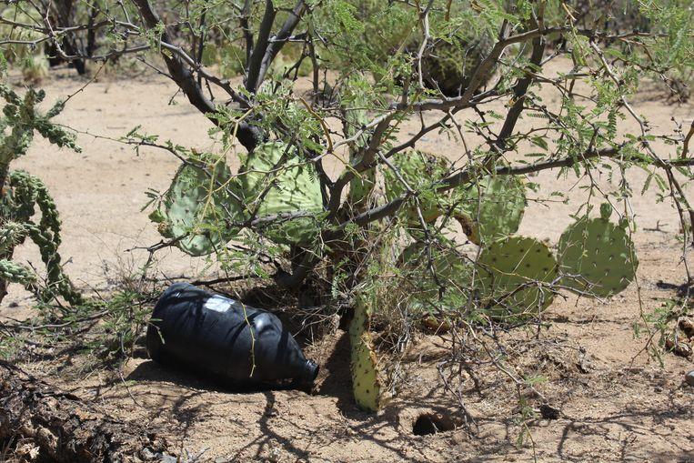 In de woestijn zijn soms sporen te vinden van 'illegale overstekers'. Beeld AD / Karlijn van Hoewelingen