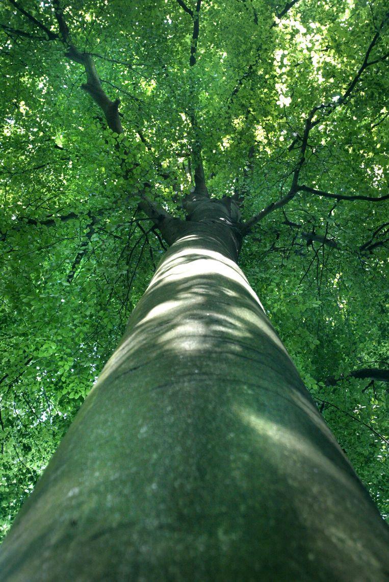 Bomen maken wel degelijk geluiden. De Nederlandse componist Bert Barten heeft ze opgevangen. Beeld Tim Dirven