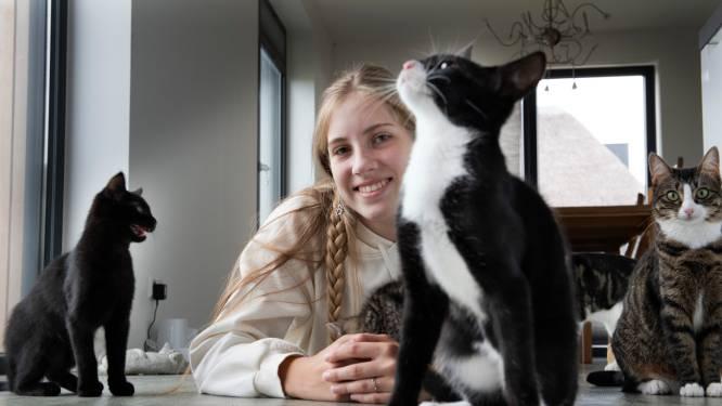 Astrid ving zelf al 27 katten op: nu zoekt ze tijdelijke baasjes voor 200 harige huisgenootjes