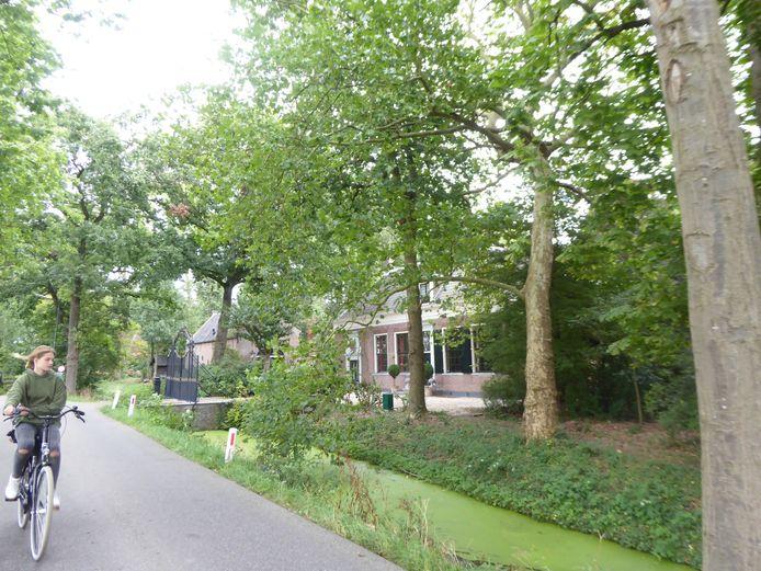 De bomen bij Huis Jaarsveld verdwijnen binnenkort en maken later plaats voor nieuw.