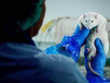 Dit is waarom het aantal dierproeven in Utrecht het afgelopen jaar licht steeg
