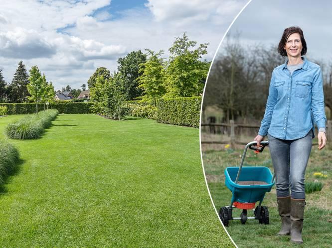 Wat doe je tegen klaver en mierennesten in je gras? Tuinexperte beantwoordt de 10 meest gestelde gazonvragen