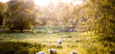 Un chien errant tue sept moutons en province d'Anvers