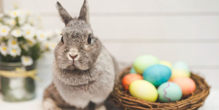 konijn-ras-margriet.jpg