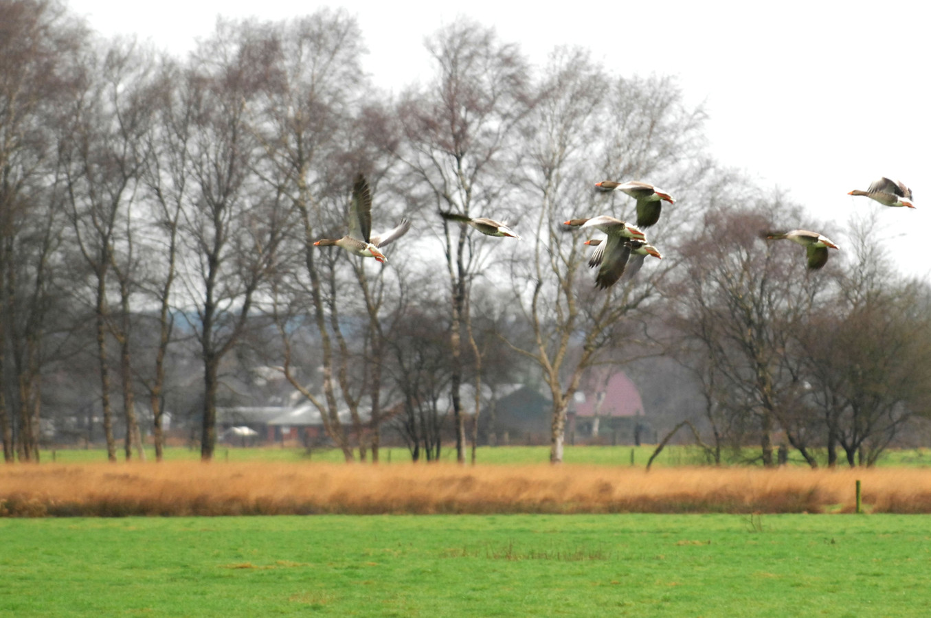 In het beschermde natuurgebied het Wierdense Veld tussen Wierden en Nijverdal broeden veel bijzondere vogelsoorten, waaronder kraanvogels.
