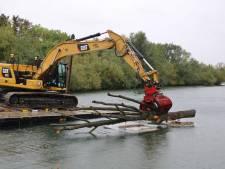 Bomen worden afgezonken in Bernisse: 'Recreanten moeten nu opletten'