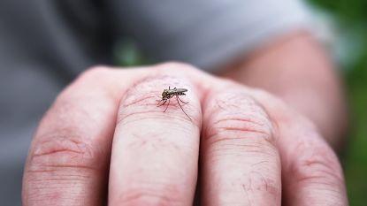 """Wetenschap werkt aan muggen die niet meer steken: """"Geen beet, geen ziekte"""""""