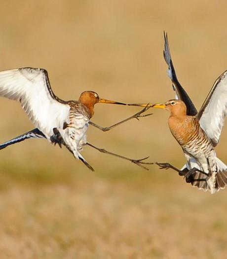 Cursus bekijken van 'zeldzame' weidevogels