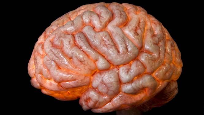 Aandacht voor gezonde hersenen