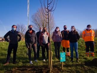 Symbolische toekomstboom in Edegems Hazelbos geplant